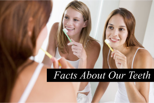 3 Interesting Facts About Our Teeth